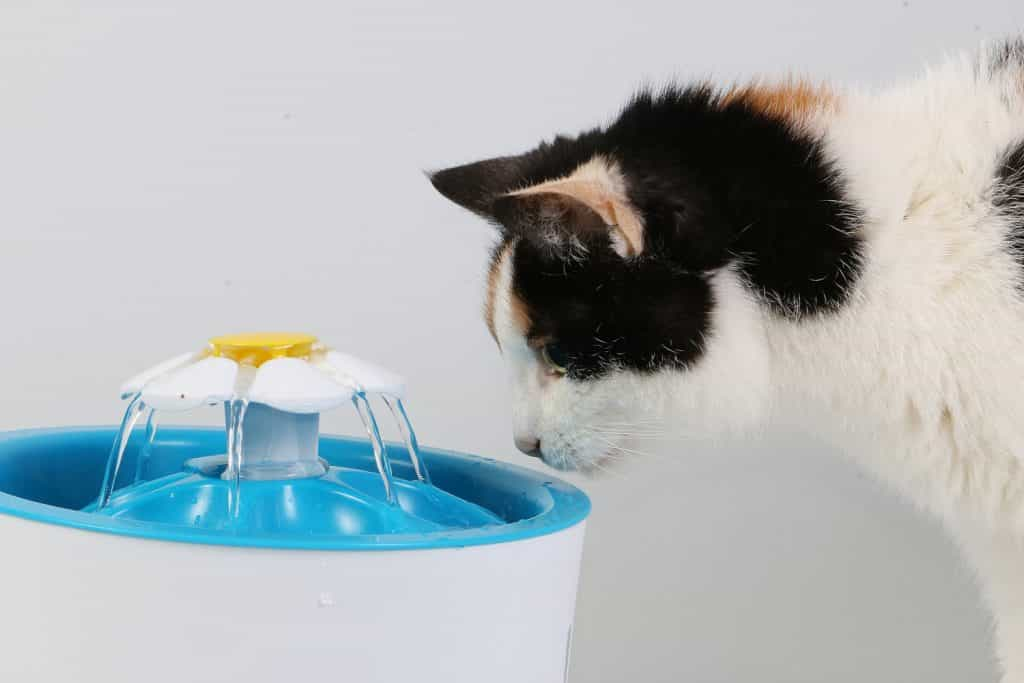battery operated cat fountain