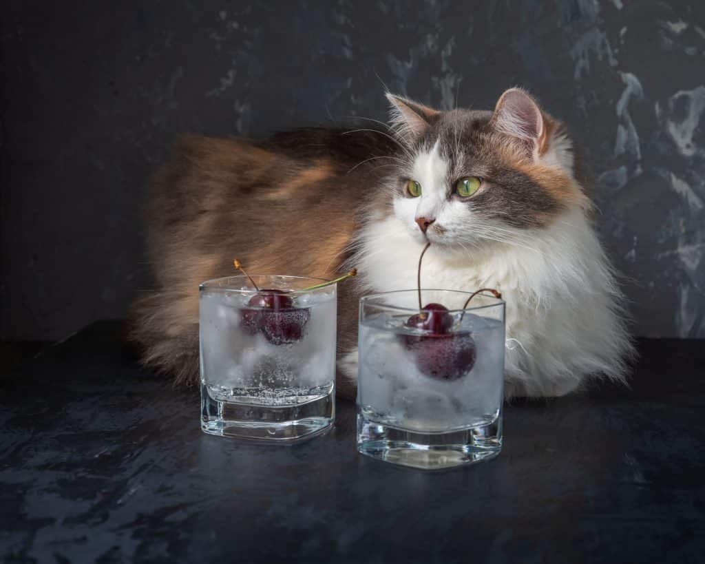 what can cats drink besides water