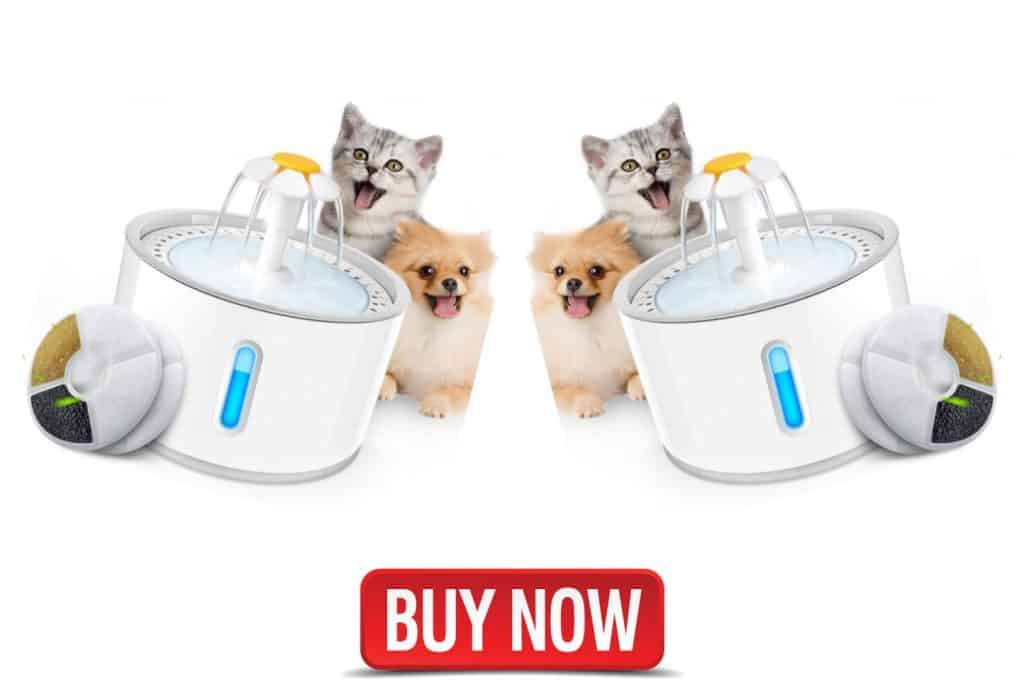 cat water fountains uk