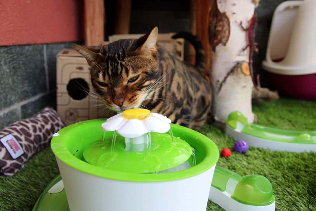 motion sensor cat water fountain