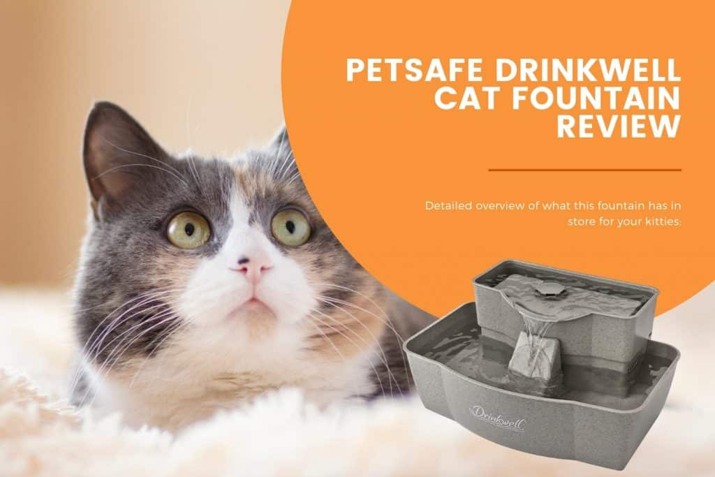 petsafe drinkwell cat fountain review