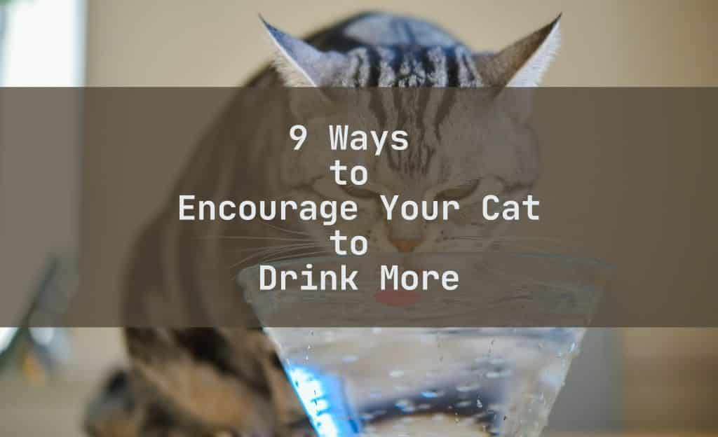 9 Ways to Encourage Your Cat to Drink More