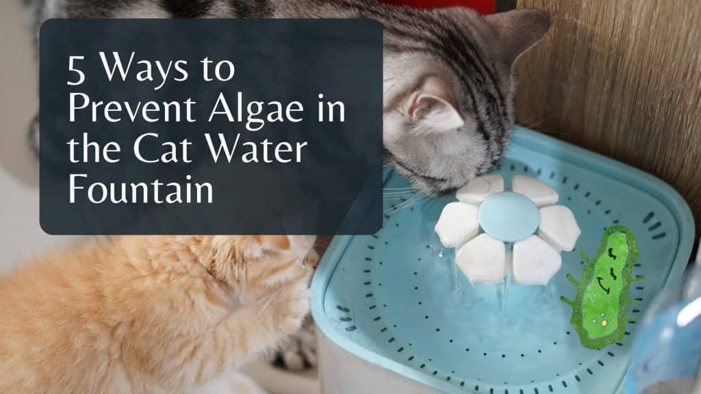 Algae in Cat water fountain