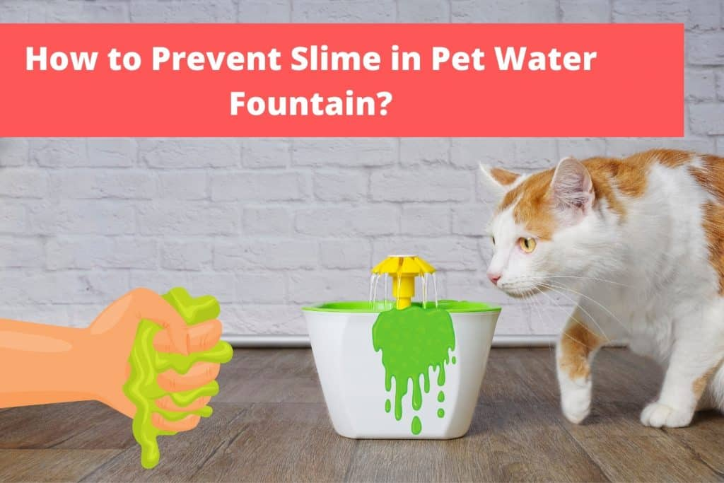 How to Prevent Slime in PetWater Fountain?