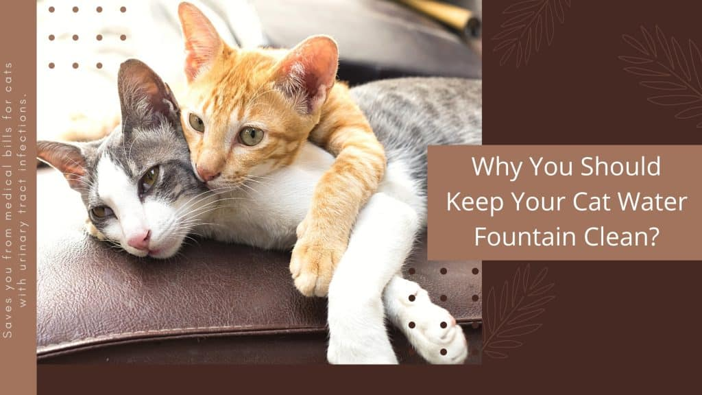 Why You Should Keep Your Cat Water Fountain Clean