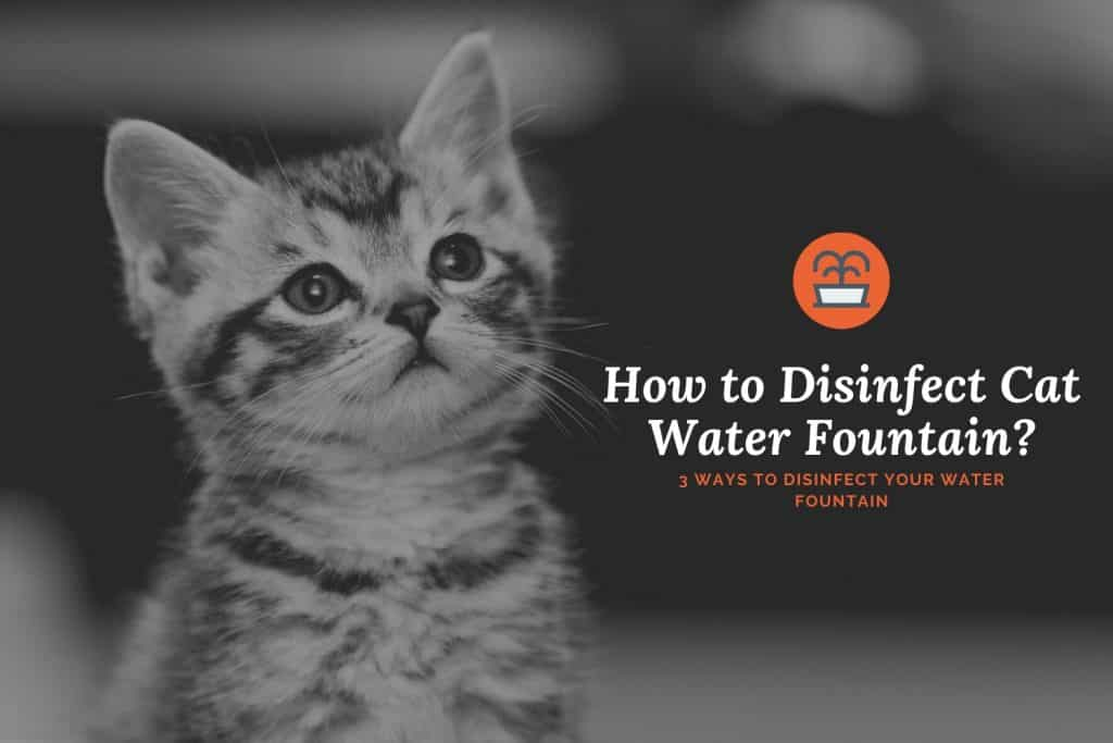 how to disinfect cat water fountain