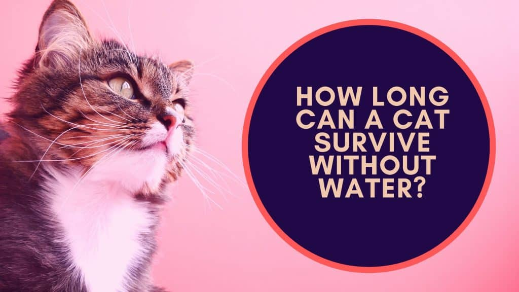 how long can a cat survive without water