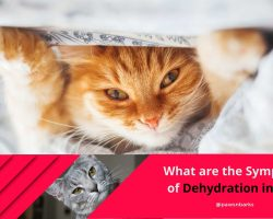 Symptoms of Dehydration in Cats